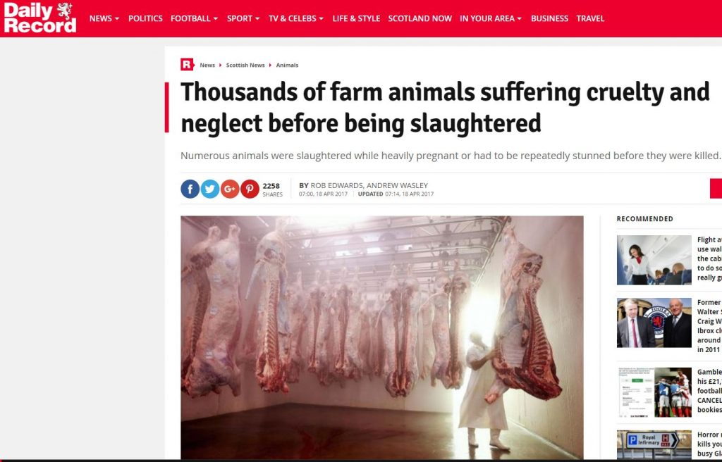 slaughterthouse conservative animal welfare foundation