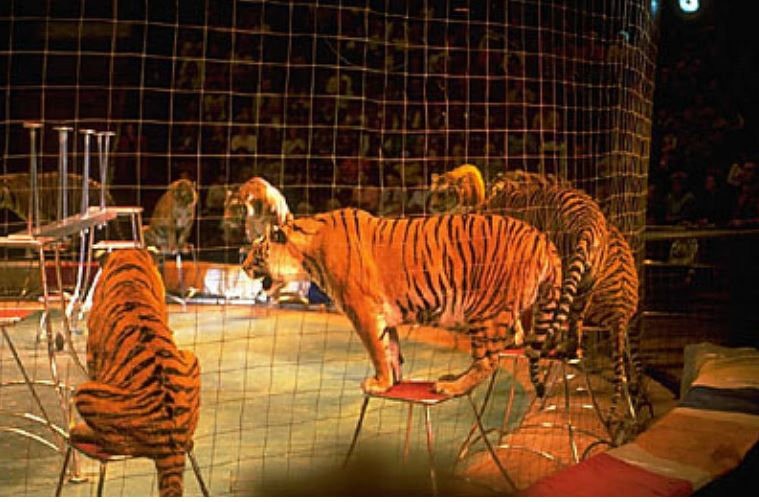 circus pic conservative animal welfare foundation
