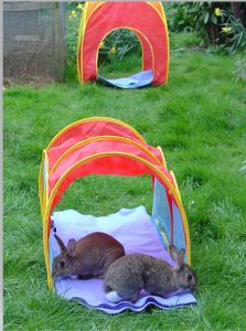rabbits outside conservative animal welfare foundation