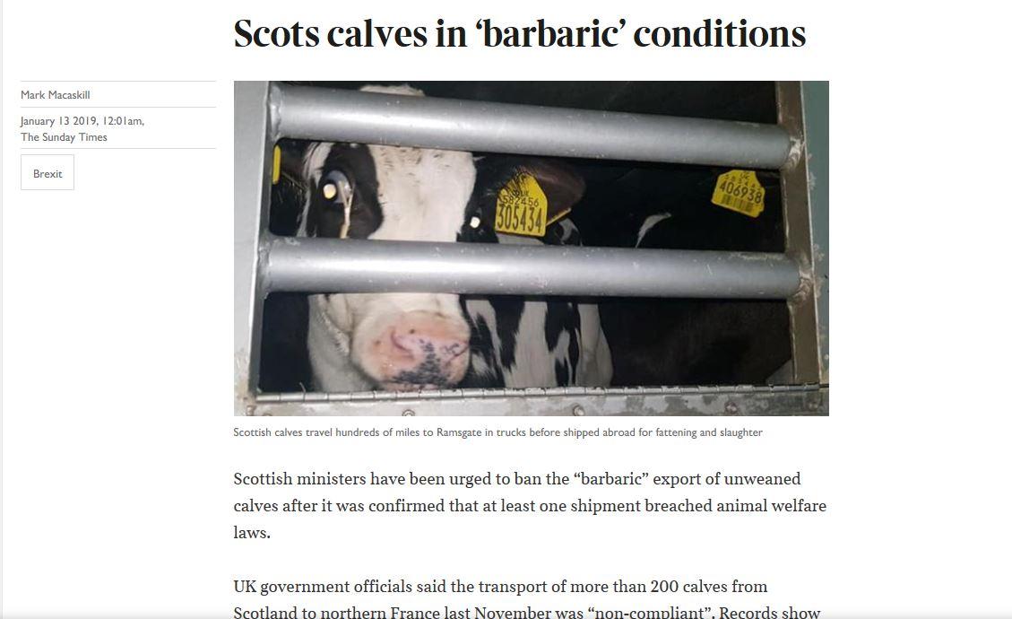 scottish calves brutal pic