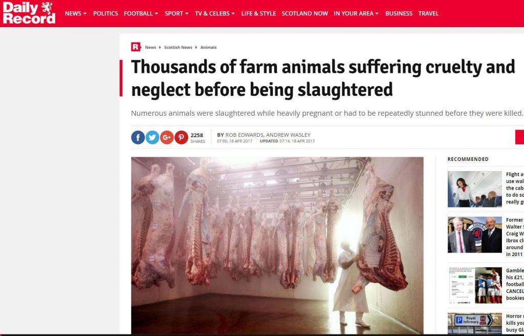 slaughterthouse conservative animal welfare foundation