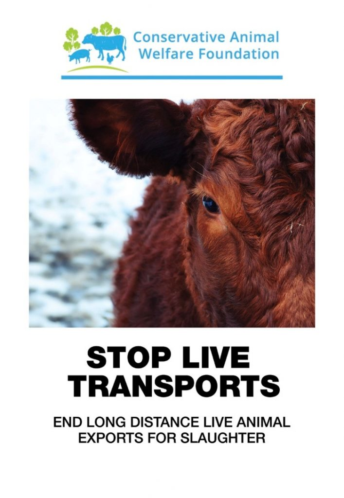 cawf live exports banner professional