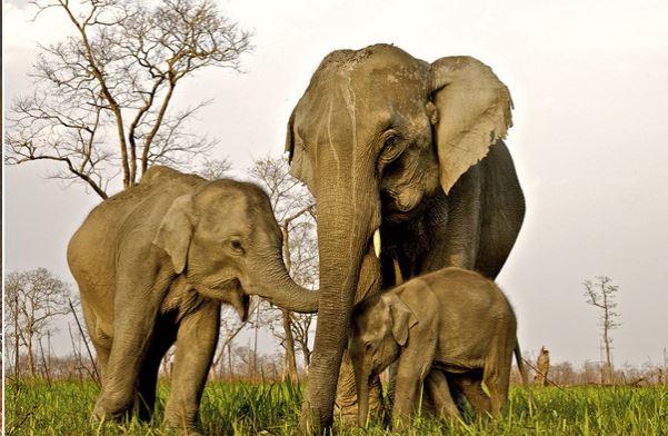 stae baby elephants happy pic