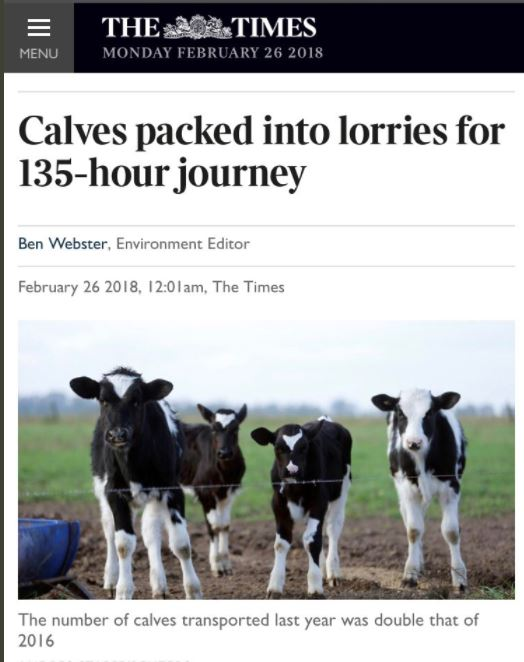 CONSERVATIVE ANIMAL WELFARE FOUNDATION CALVES TIMES ARTICLE PIC