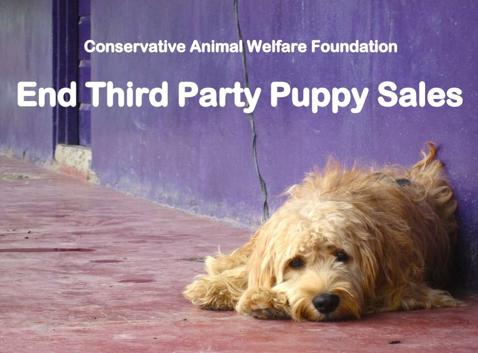 puppy sales pic cawf