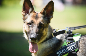 s300_Service_dog