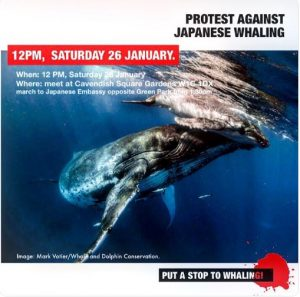 No whaling March, japan embassy conservative animal welfare foundation group banner