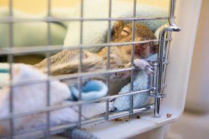 squirrel sick
