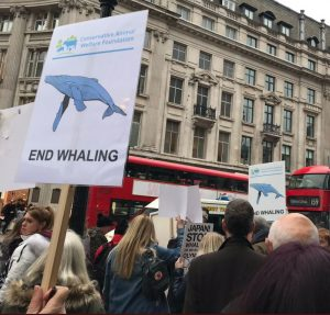 whaling march buses conservative animal welfare foundation protest