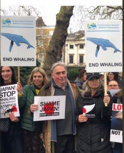 whaling pic group conservative animal welfare foundation no whaling march